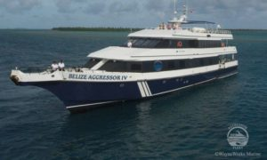 Belize Aggressor III - Belize Liveaboard Diving