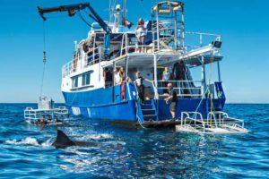 Princess II - Neptune Island Shark Cage Diving
