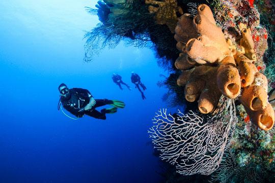 Bali Wall Diving