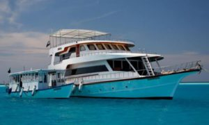 MV Sheena - Maldives Liveaboard Diving