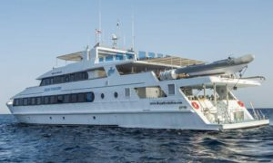 MS Royal Evolution - Red Sea Liveaboard Diving