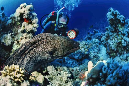 Best Red Sea Liveaboards | Joe's Scuba Shack