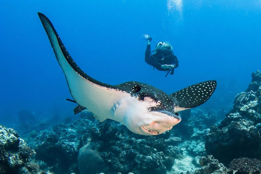 Eagle Ray French Polynesia Liveaboard