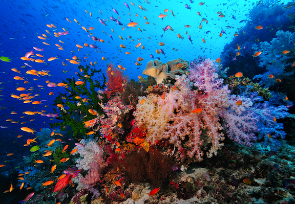 Anilao Reef Scene Philippines Scuba Diving