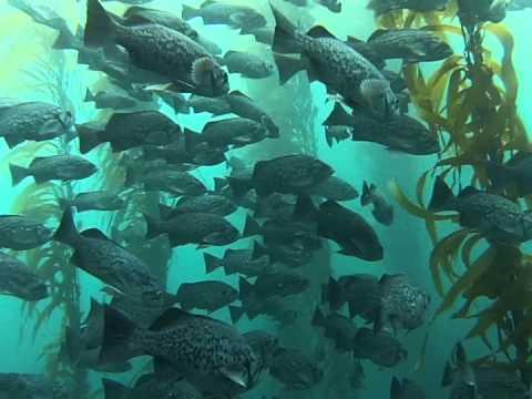 Point Lobos Scuba Diving