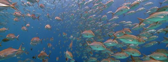 Talima Jacks Philippines Scuba Diving