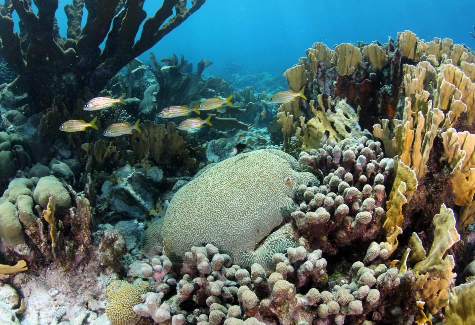 Curacao Reef