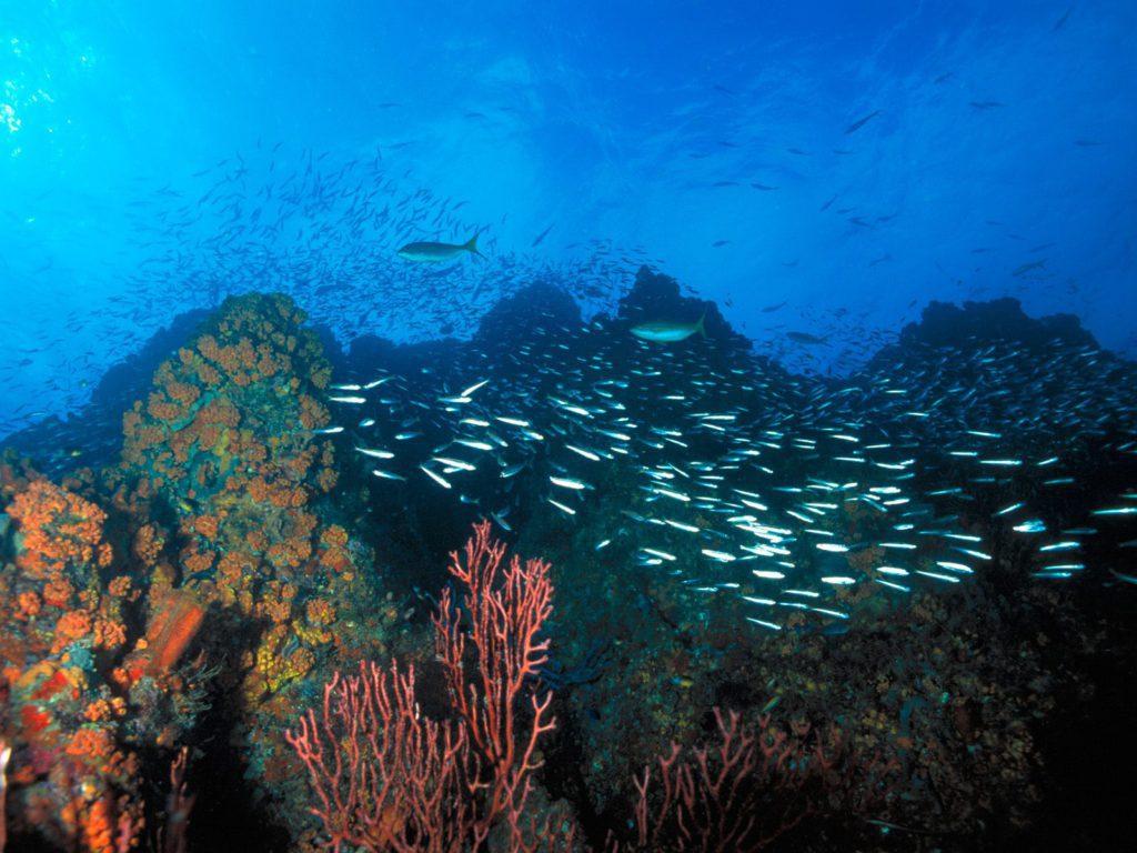 Los Roques Reef Venezuela