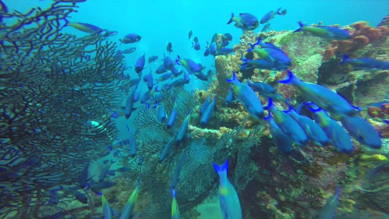 SS Stavronikita - Barbados Shipwreck