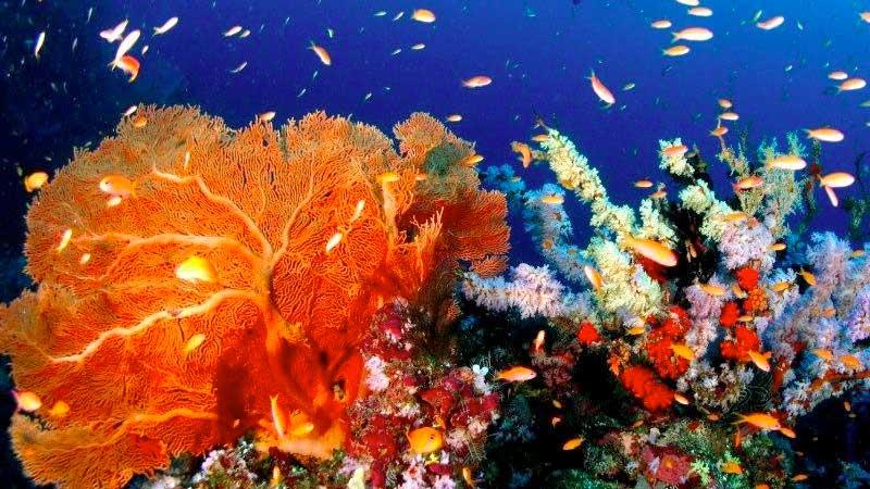 Pulau Weh Coral Reef