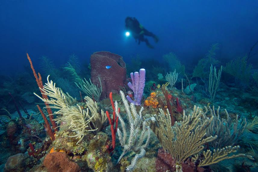 Turks and Caicos Coral Reef