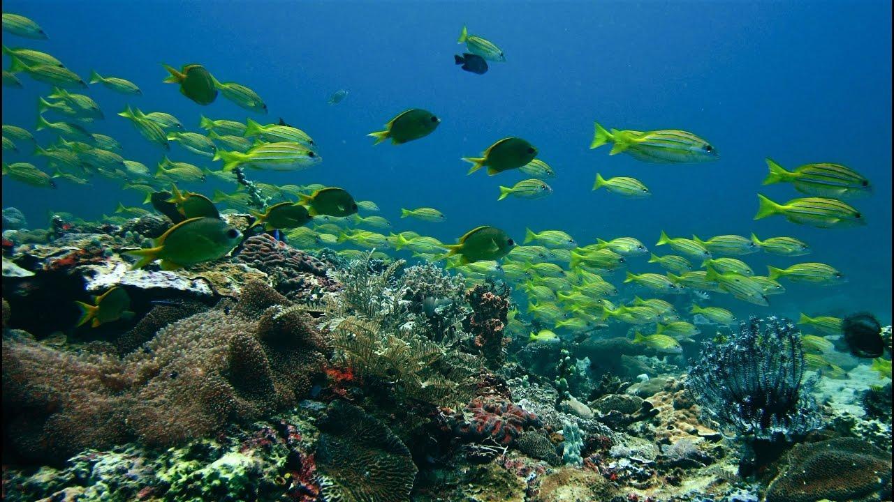 Reef Scene - Puerto Princesa, Palawan, Philippines