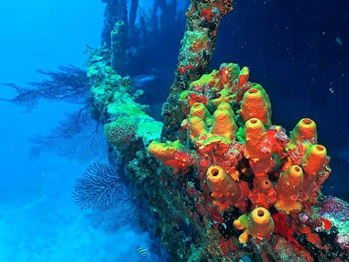 Lesleen M Wreck - St. Lucia Scuba Diving