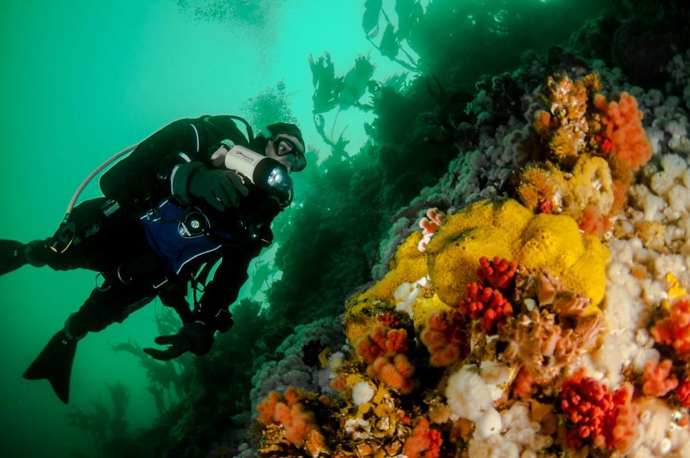 Nanaimo, Vancouver Island Reef