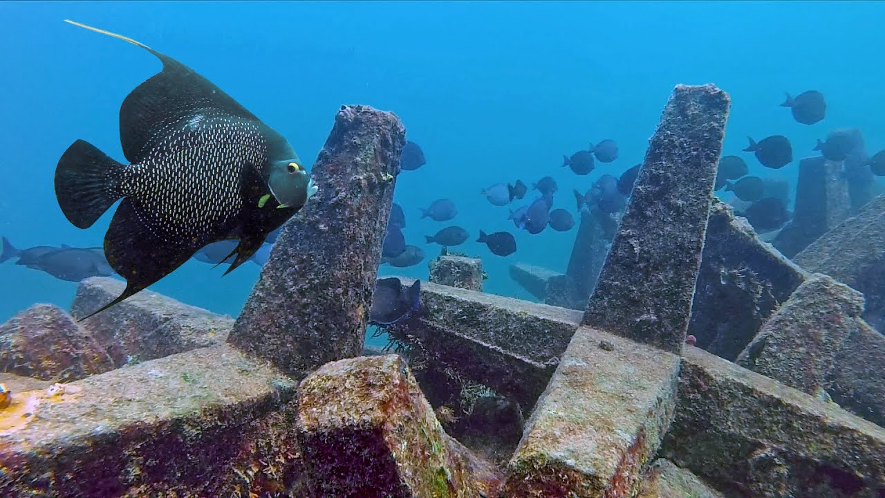 French Angelfish & Erojacks - Fort Lauderdale, Florida