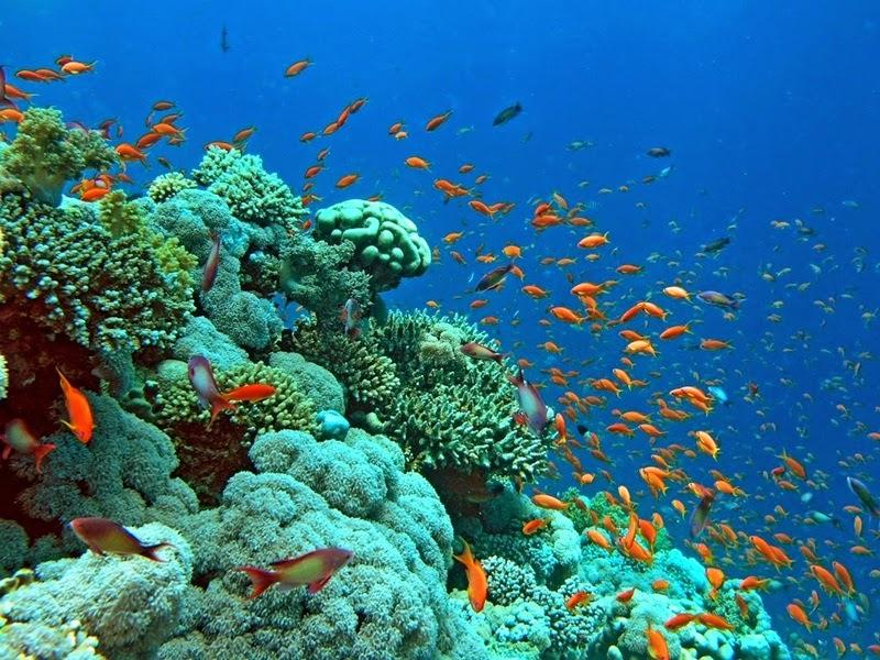 Coral Reef - Redang Island, Malaysia