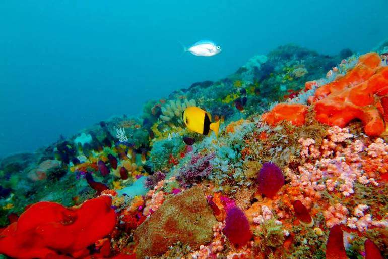 Coral Reef - Port Elizabeth, South Africa