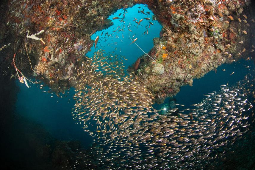 Maldives Liveaboard Diving