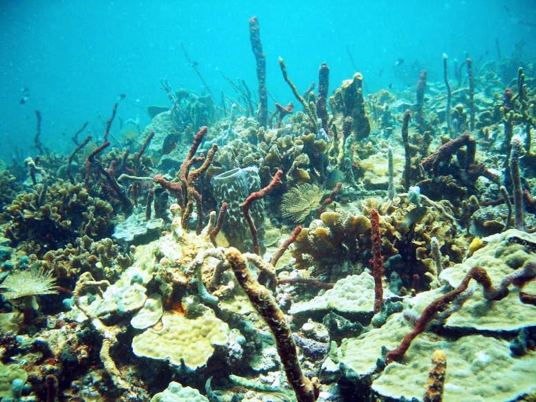 Caribbean Reef - Bocas Del Toro, Panama