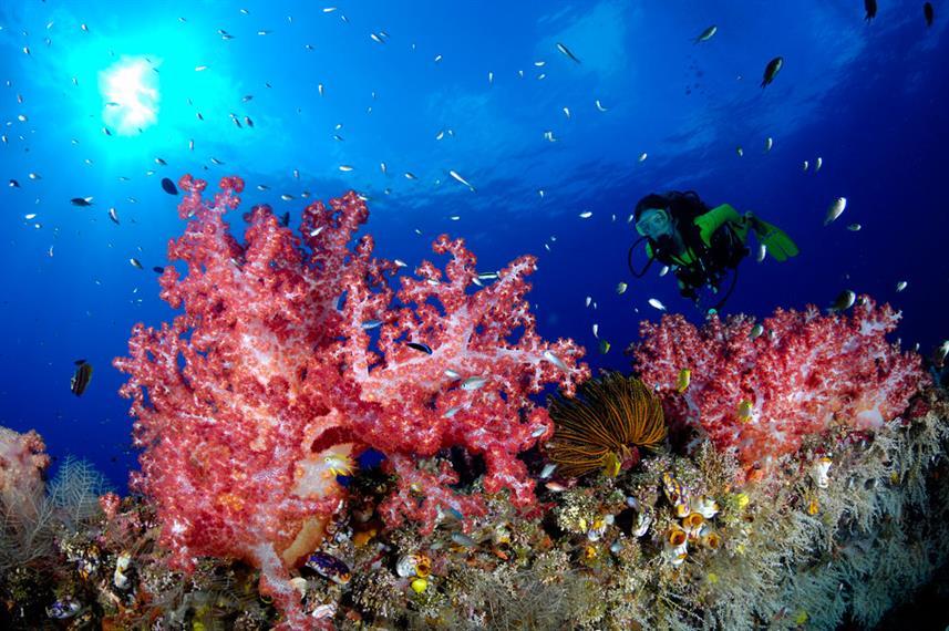 Papua New Guinea - Soft Corals