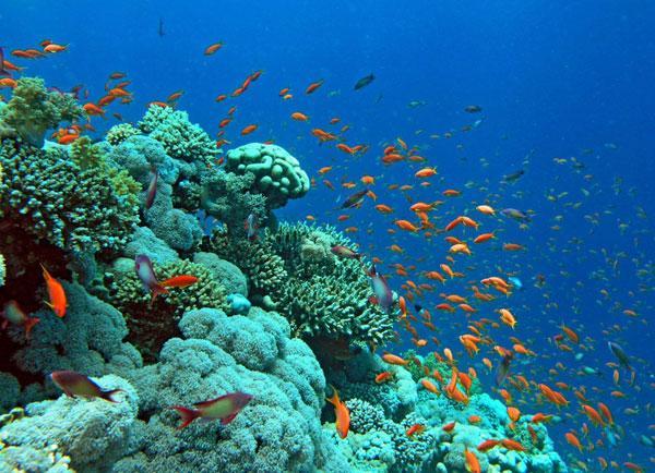 Coral Reef - Aqaba, Jordan