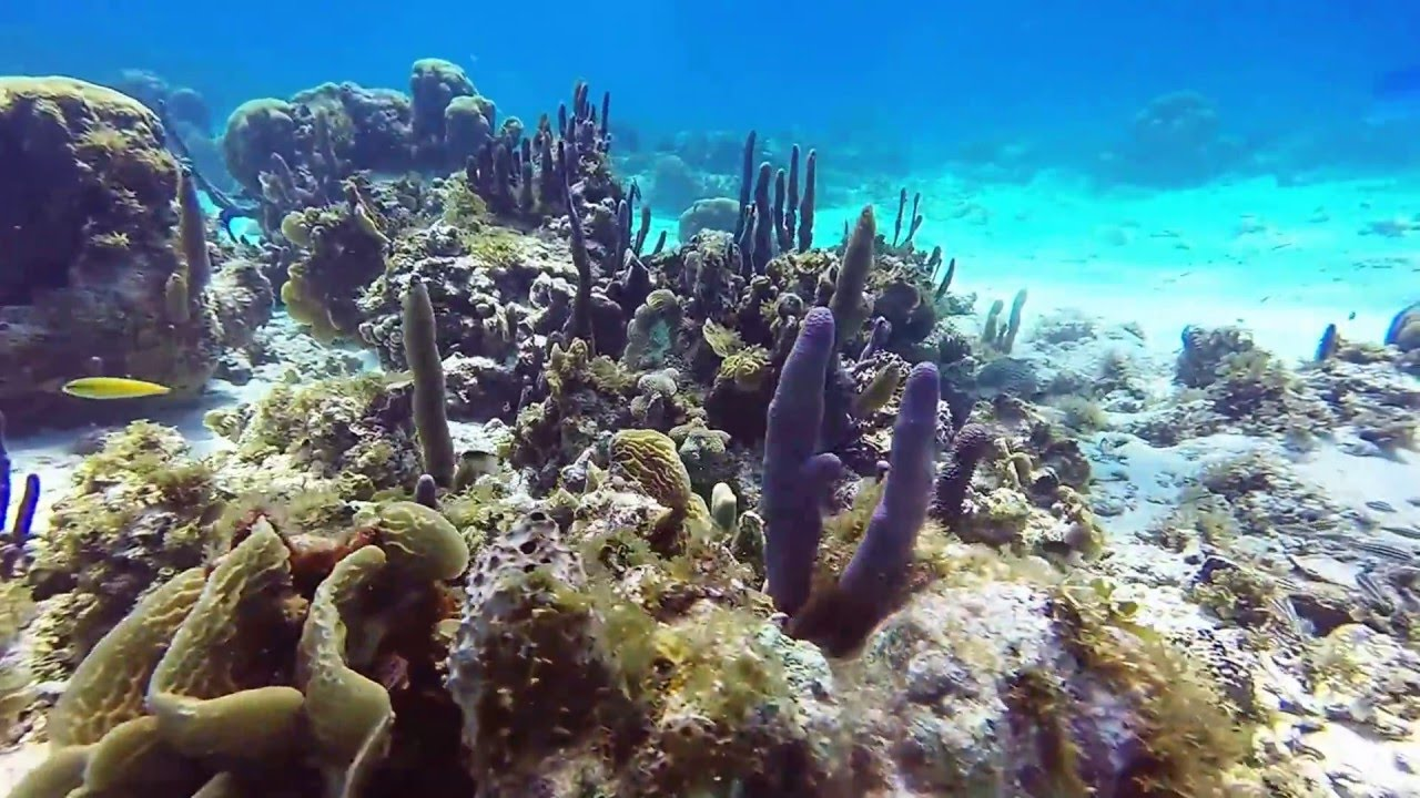 Coral Reef - San Andrés, Colombia
