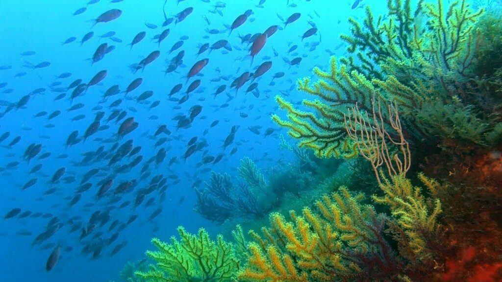 Coral Reef Scene - Costa Brava, Spain