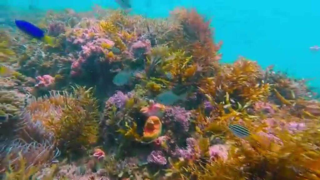 Kirra Reef - Gold Coast Australia