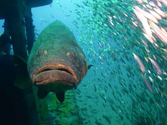 Scuba Diving Fort Myers Florida