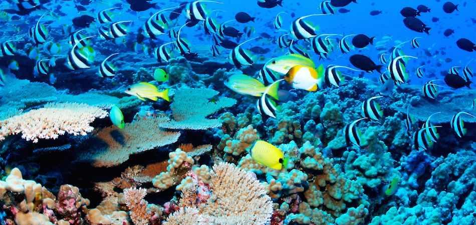 Netrani Island - India Scuba Diving Scene