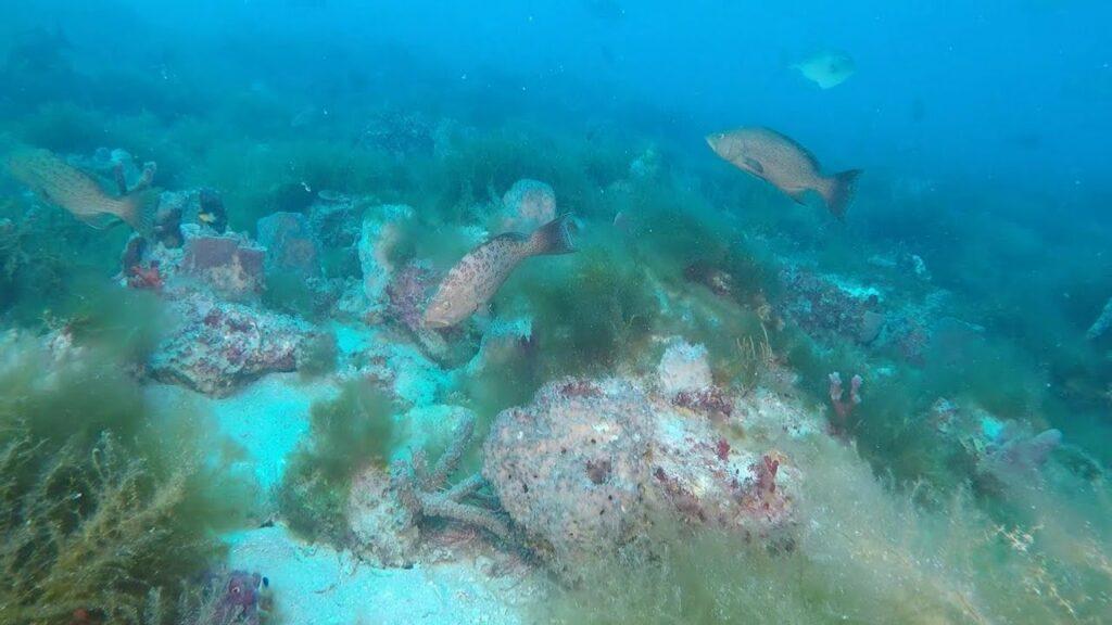 Hard Bottom Ledge Reef - Sarasota, Florida