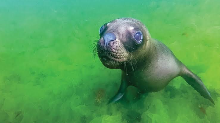 Punta Loma Sea Lion - Peninsula Valdes, Argentina