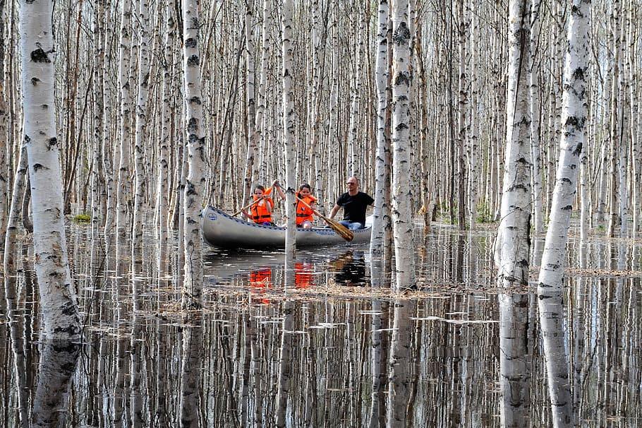 Canoeing Among Birches